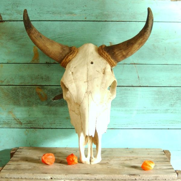 Vintage Real Steer Bull Cow Head Skull With Horns From